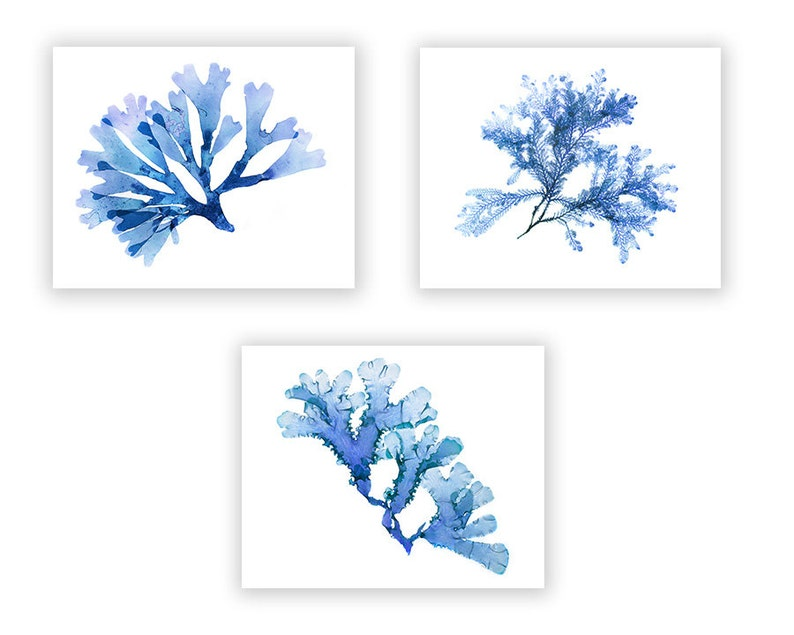 Blue Seaweed Art Set of Three Prints Extra Large Sizes image 0