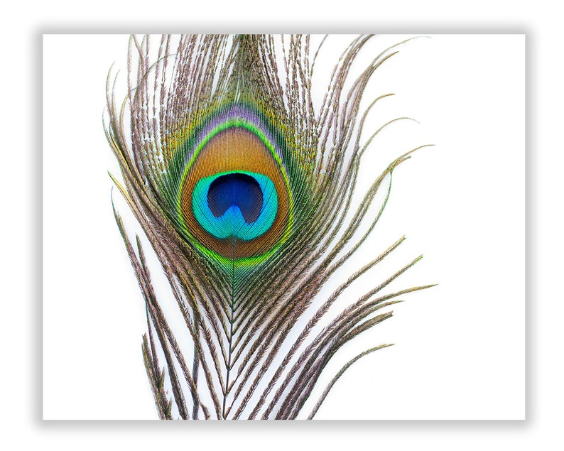 Oversized Peacock Feather Canvas Wrap Modern Teal Green Wall image 0