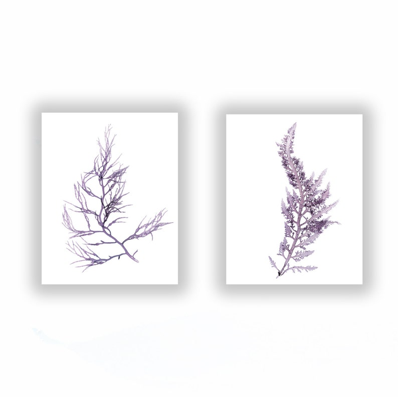 Seaweed Set of Prints Large 11x14 In Muted Violet Color image 0