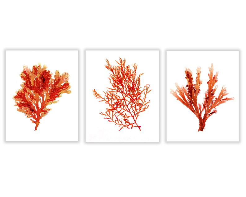 Large Coastal Decor Red Seaweed Prints Large Red Coral image 0