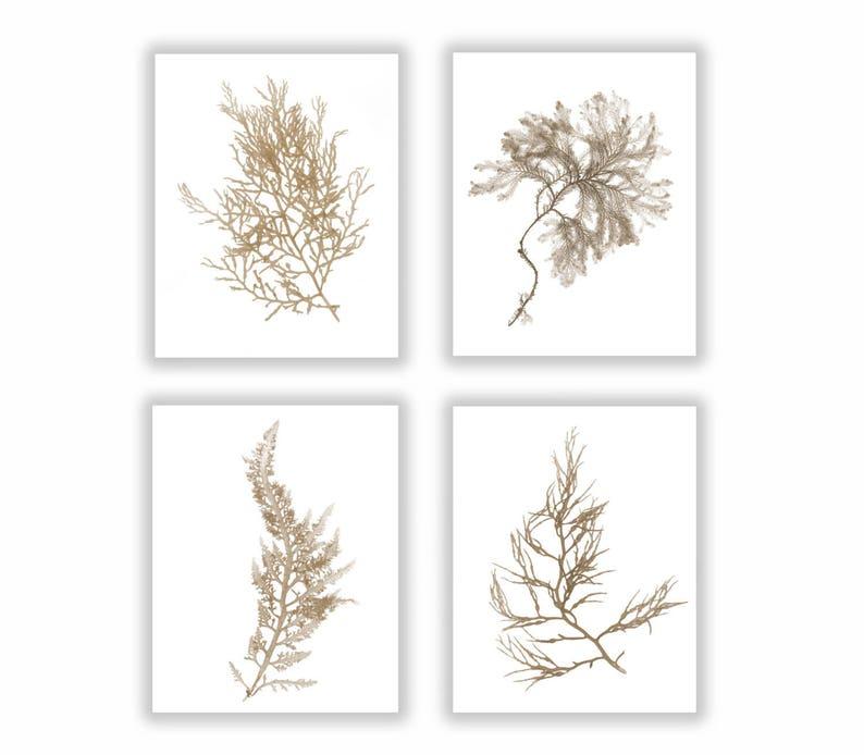 Brown Coastal Print Set Large Botanical Set Botanical image 0