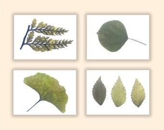 Botanical Print Set, Fern Print Set of Four, Fern, Aspen, Gingko, Elm, Green, Brown, Soft, Earth Tones, Natural Curiosities