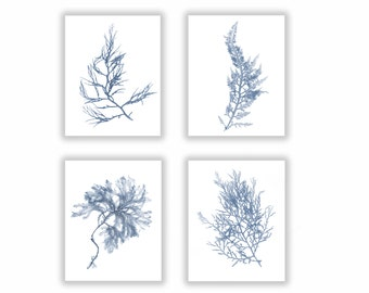 Large Set of Four, Seaweed Prints French Blue Botanical Artwork, Ocean, Coastal Living, Beach, Wall Decor, 11x14