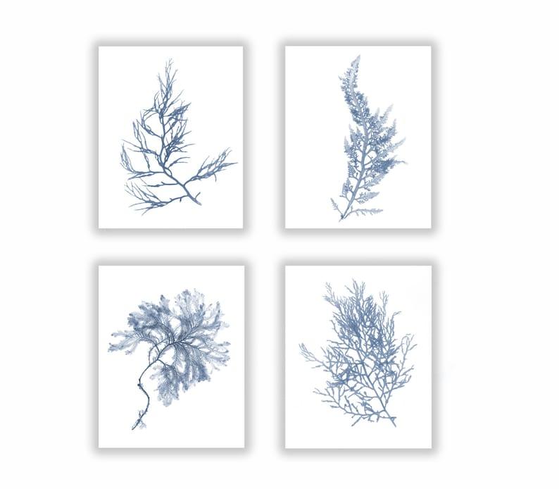 Set of Four Seaweed Prints French Blue Botanical Artwork image 0