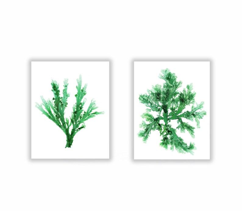 Emerald Green Seaweed Artwork Set of Two 8x10 Ocean Botanical image 0