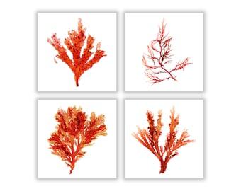 Seaweed Square Set of Four, Seaweed Print Vibrant Red Orange Botanical Artwork, Ocean, Coastal Living, Beach, Wall Decor, Small 5x5