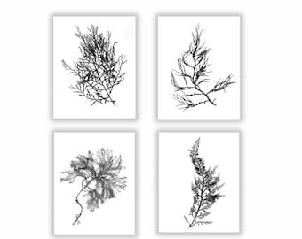 Black and White Botanical Coastal Print Set, Seaweed Print Set, Botanical Artwork, Abstract Leaf Art, Extra Large Wall Art, Beach Art Large