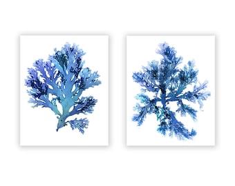 Seaweed Art Prints, Large Blue Artwork, Beach House Wall Decor, Coastal Artwork Home, Set of Two, Original Nautical Prints