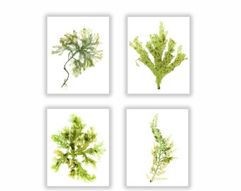 Seaweed Set of Four, Seaweed Print Vibrant Green Botanical Artwork, Ocean, Coastal Living, Beach, Wall Decor, Matted Print