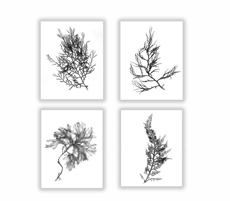 Black and White Botanical Seaweed Print Set Wall Decor Set image 0