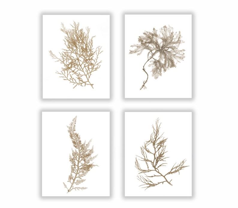 Natural Sepia Warm Brown Botanical Seaweed Print Set Wall image 0
