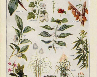Sustainable Aromatherapy Download