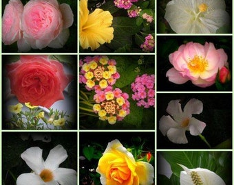 Flower Oils. Infusions Essences and Absolutes. Sacred Energetics Essences.
