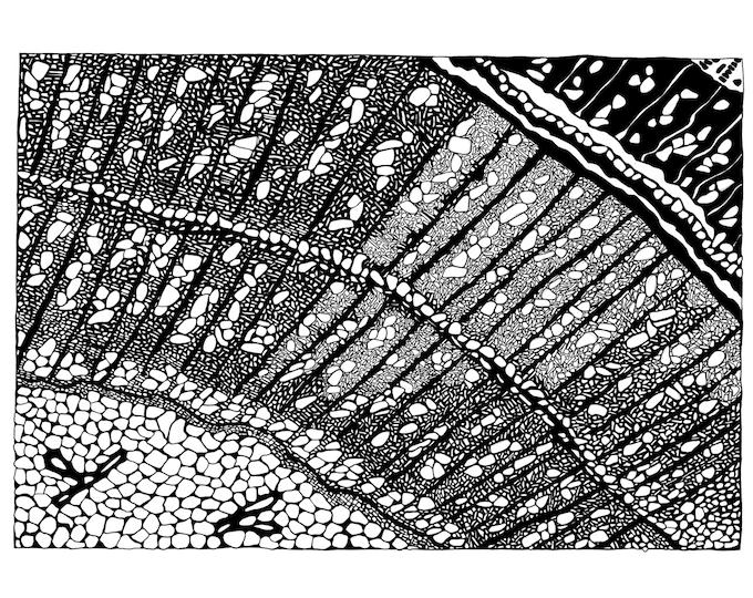 Tree Root Print