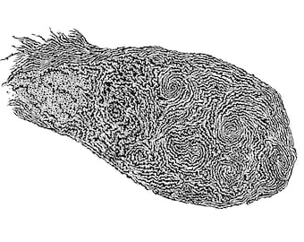 Fingerprint Pen & Ink