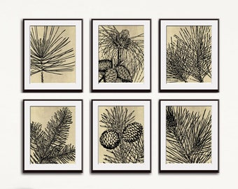 Woodland Chic Pine Cone (Series C6) Set of 6 - Art Prints (Featured in Black on Washed Linen) Modern Botanical Flower Art Prints