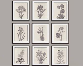 Wild Flower Botanical Prints (Series G2) Set of 9 - Art Prints (Featured in Charcoal on Stone Wash) Vintage Modern Art Prints