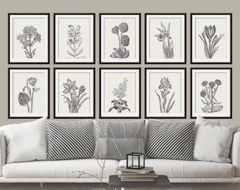 Wild Flower Botanical Prints (Series H10) Set of 10 - Art Prints - (Featured in Cream and Charcoal)