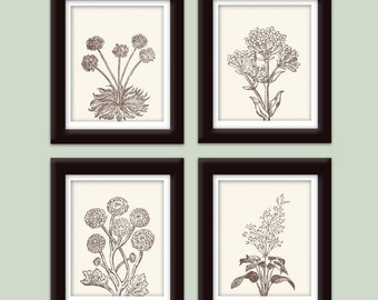 Wild Flowers Botanical Prints (Series C ) Set of 4 - Art Prints (Featured in Cream and Chocolate Brown)