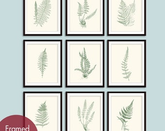 Ferns Garden Botanical Prints (Series E) Set of 9 -Art Prints (Featured in Cream and Thyme Green)