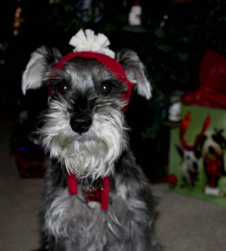 toboggan skullcap winter dog hat Warm dog hat dog winter wear Solid Color dog Toboggan