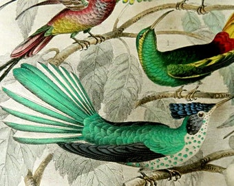 ANTIQUE HUMMINGBIRD PRINT,hand colored engraving,1860's, fine art nature print,bird print,Stokes,Topaz Throated,Bar Tailed,turquoise,red,tan
