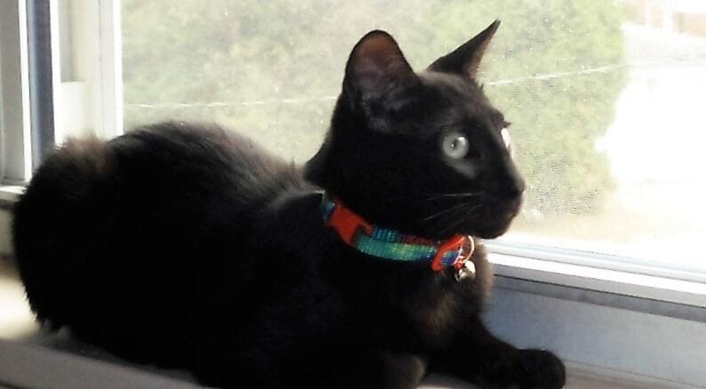 Tie Dyed Webbing Kitten Collar