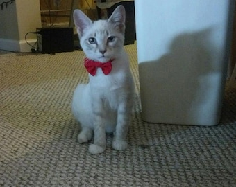 Kitten Bow Tie Collar for Valentines Day Or Christmas