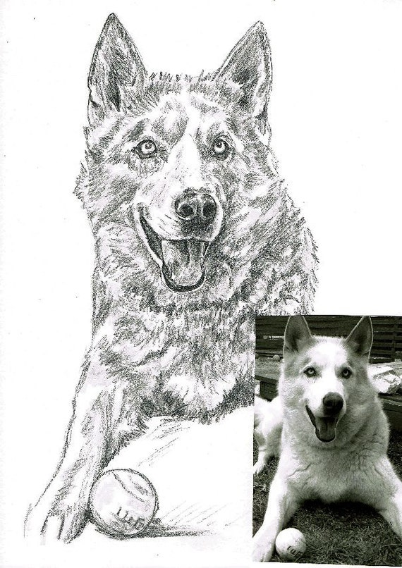custom drawing of your pet