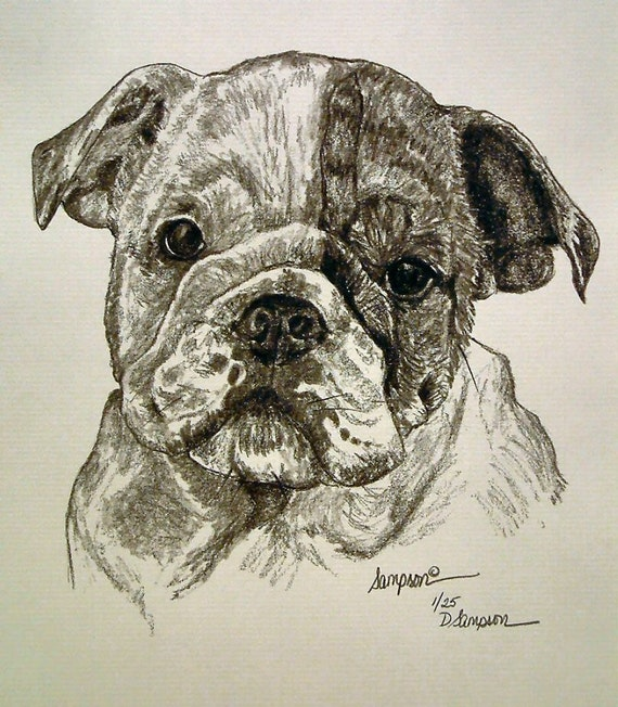 Commission Custom Portrait Pet dog cat pencil graphite on paper