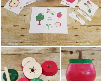 Stacking apple, Apple anatomy, apple three part cards, apple preschool unit