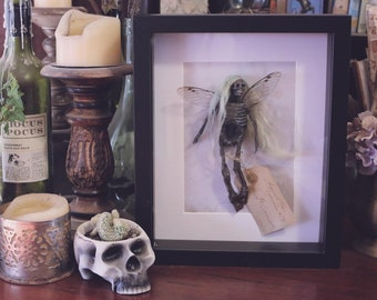 Preserved Faery Specimen #75 Mummified Fairy
