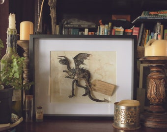 Dragon Preserved Draco Specimen #78