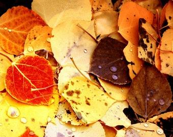 Fall aspen leaves photo, aspen tree leaf art, Colorado art, colorful fall color photo, fall decor, rustic wall cabin decor | Forest Floor