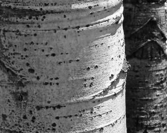 Aspen tree photo, Colorado art, aspen tree trunks, rustic home decor, aspen tree eyes, living room art, cabin decor, vertical nature photo