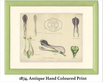 Green 187474 Vegetable Kingdom Flower Hand-colored Antique Botanical Print Frameable Nat History Thorny Olive Silver Thorn