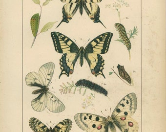 Antique Butterfly Print,  Swallowtail, 1895, Lepidoptera Plate 1, Natural History, Kirby, Kappel, Deuchert, Slocombe
