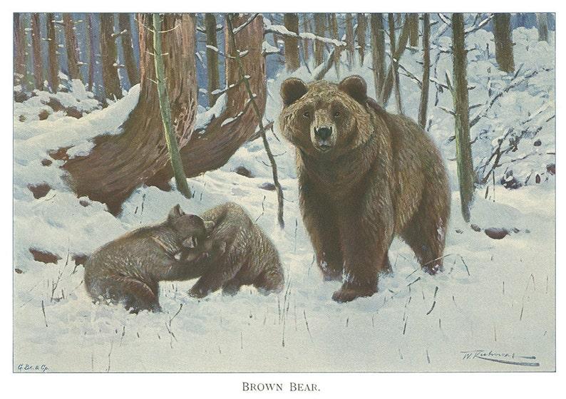 e9350a9f8e6 Petits ours brun dans la neige Art animalier histoire