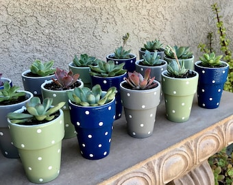 Baby Shower Favors - Set of 25 - Succulent Planters - Polka Dot Planters - Small Planters  - Garden Baby Shower - Outdoor Baby Shower