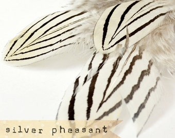 12 pcs - NATURAL - Silver Pheasant Feathers - select grade, zebra, stripes, exotic feathers