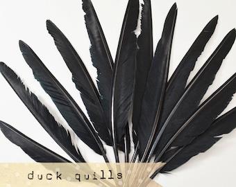 10pcs - Large Duck Quills - Black - Stiff loose feathers