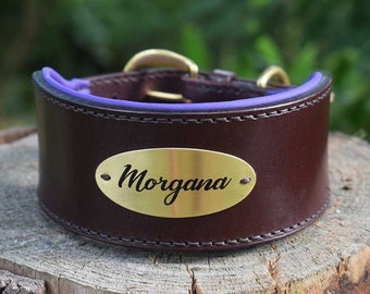 Greyhound Padded Leather Dog collar with Custom Etched Plate - size M