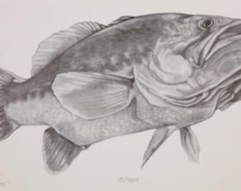 Big Largemouth Bass pencil drawing