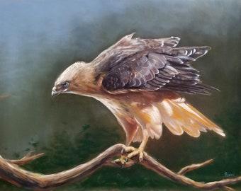 ORIGINAL OIL PAINTING Hawk in the Pines 12x16 Linda Merchant Pearce Fine Art Hand Painted Bird Oil Painting Wildlife Bird ooak