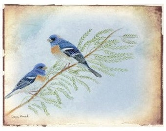 Lazuli Buntings on mesquite 8x10 inch Giclee