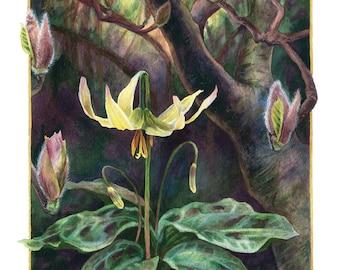 Fine Art Print of Original Watercolor Painting - Erythronium