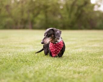 Dog Bandana,  Pet Scarf- Red Stars - 4th of July- Bandana