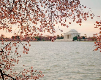 Washington DC Photography, Cherry Blossom Fine Art Print, Travel Picture, Large Living Room Wall Art, Home Decor, Gift for Her, Floral Print