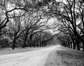 Black and White Landscape Photograph, Oak Tree Fine Art, Savannah Georgia, Southern Art, Large Wall Art, Tree Home Decor, 8x10, 11x14, 16x20
