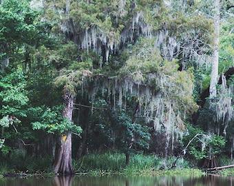 "Louisiana ""Bayou #1"" Photograph. Affordable Home Decor. Swamp Print, Spanish Moss Cypress Photography. 8x10, 11x14, 16x20, 20x24, 24x30+"